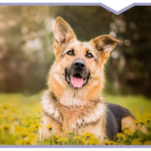 Dla dorosłych psów (25-70kg)