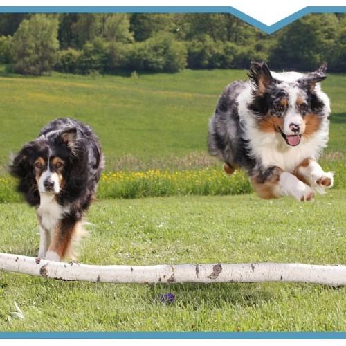 Dla aktywnych psów