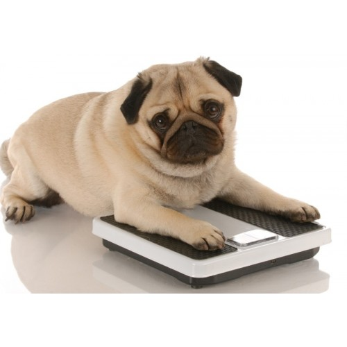 Dla psów z nadwagą