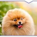 Dla psów o rudej sierści